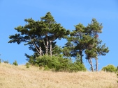 190406~閂山之我的第八座百岳:跟鈴鳴比起來 往閂山的路上多了許多漂亮的杉木
