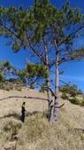 190406~閂山之我的第八座百岳:藍天襯托下 杉木變的更美了!