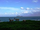 蘭嶼之風景人文篇:接著 一群看海的羊咩咩也映入眼簾 ^^