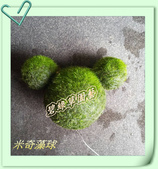 水族水草:IMG_2584.JPG
