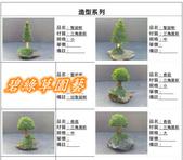 水族水草:IMG_2573-11.jpg