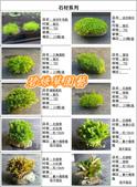 水族水草:IMG_2569-11.jpg