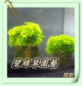 水族水草:IMG_2580.JPG