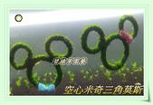 水族水草:空心米奇三角莫斯.JPG
