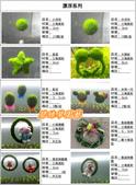 水族水草:IMG_2575-11.jpg