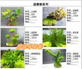 水族水草:IMG_2574-11.jpg