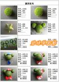 水族水草:IMG_2572-11.jpg