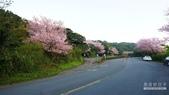 二○二○陽明山櫻花季:12.jpg