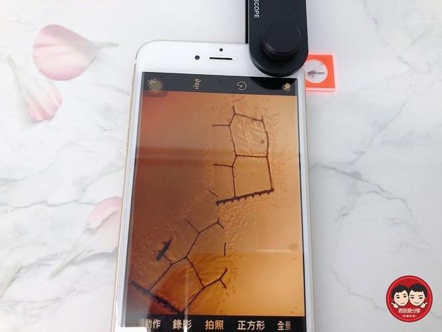 顯微鏡:jun&chen_img_021025449.JPG