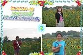 93.04.24-26 台南之旅:美美的向日葵