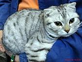 97.11.30 牛角日式燒烤 & 東區半日遊:會看鏡頭的貓