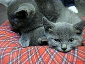 97.11.30 牛角日式燒烤 & 東區半日遊:俄羅斯藍貓