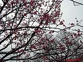 98.02.15 陽明山花季:IMG_5717.jpg