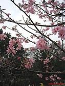 98.02.15 陽明山花季:IMG_5782.jpg
