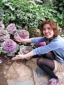 98.02.15 陽明山花季:紫色的不知名花!(聽到超多人說是高麗菜~)