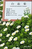 中社觀光花市(后里):
