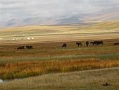 北疆遊--中國新疆〈天山以北〉:天鵝湖草園區.JPG