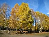 北疆遊--中國新疆〈天山以北〉:金秋禾木村.JPG