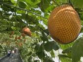 屏東:屏東熱帶農業博覽會13.JPG