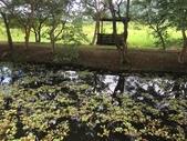 花蓮:馬太鞍濕地6.jpg