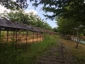 花蓮:馬太鞍濕地10.jpg