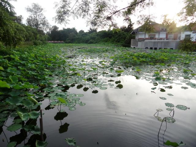 福州:雙鯉湖溼地9.jpg