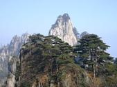 中國2:黃山松5