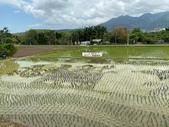台北:關渡自然公園34.jpg