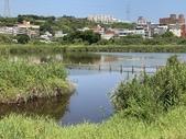 台北:關渡自然公園32.JPG
