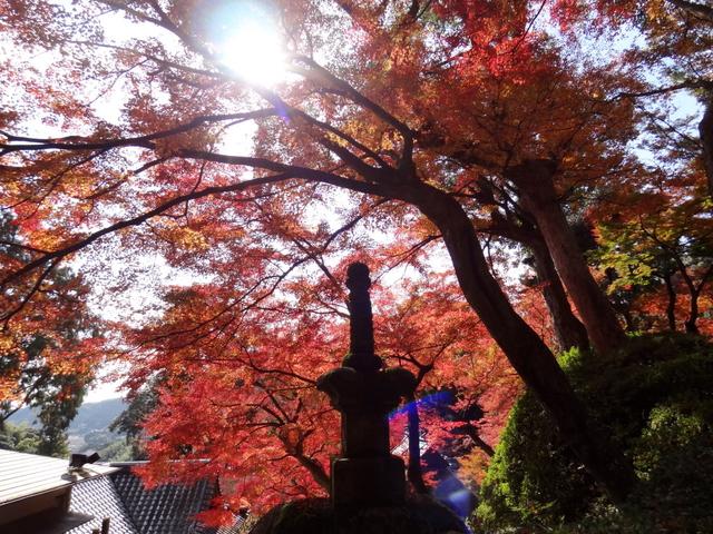 2017東京:大興善寺22.jpg