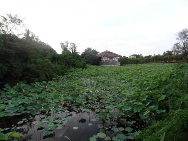 福州:雙鯉湖溼地11.jpg