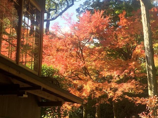 2017東京:大興善寺20.jpg