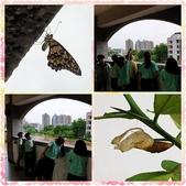 10802-06 第2學期教學札記:PhotoGrid_1589847365997.jpg