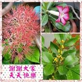 10802-06 第2學期教學札記:PhotoGrid_1590841955842.jpg