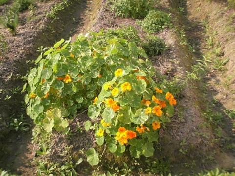 香草姐的快樂花園(過去式):2010030103.jpg