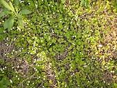 香草姐的快樂花園(過去式):2011031802.jpg