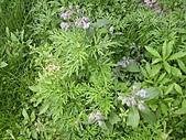 香草姐的快樂花園(過去式):2011031803.jpg