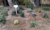 香草姐的快樂花園(現在式):不過,為讓同好對香草有更多認識