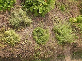 香草姐的快樂花園(過去式):2010040202.jpg