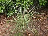 香草姐的快樂花園(過去式):2010080901.jpg