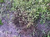 香草姐的快樂花園(過去式):2010080902.jpg