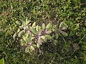 香草姐的快樂花園(過去式):2010080903.jpg