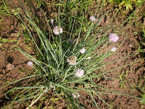 香草姐的快樂花園(過去式):2010032702.jpg