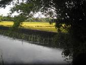香草姐的快樂花園(現在式):經過一處有小河竹林的地方