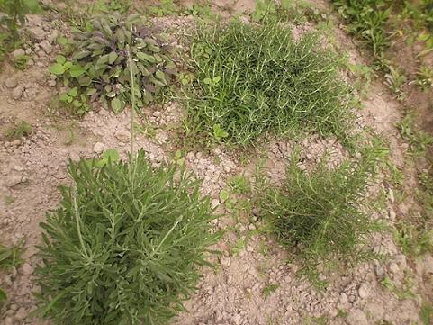 香草姐的快樂花園(過去式):2010032203.jpg