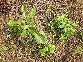 香草姐的快樂花園(過去式):2010040205.jpg