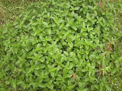 香草姐的快樂花園(過去式):2010100501.jpg
