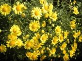 香草姐的快樂花園(現在式):好個暖冬,冷沒兩天又恢復溫暖。