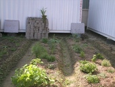 香草姐的快樂花園(過去式):2010020101.jpg