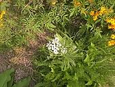 香草姐的快樂花園(過去式):2010040203.jpg